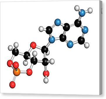 Cyclic Adenosine Monophosphate Molecule Canvas Print by Molekuul