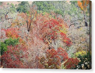 Canvas Print featuring the photograph Cypress Beauty by David  Norman