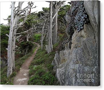 Cypress Grove Trail Canvas Print by James B Toy