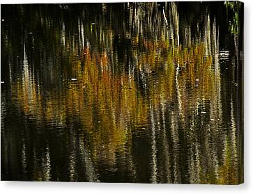 Canvas Print featuring the photograph Cypress In Reflection by Andy Crawford