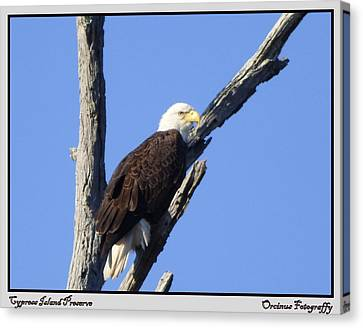 Cypress Island Eagle Canvas Print