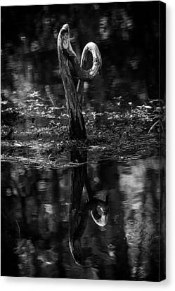 Cypress Knee Canvas Print