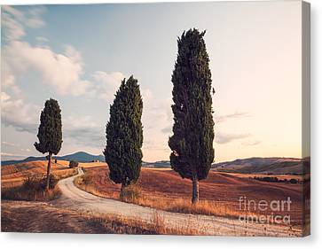 Cypress Lined Road In Tuscany Canvas Print by Matteo Colombo