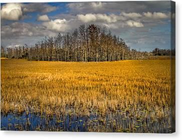 Cypress Marsh Canvas Print
