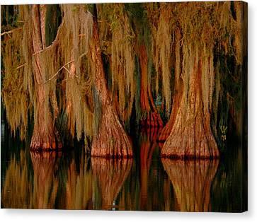 Cypress Maze Canvas Print