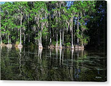Cypress On Rainbow Canvas Print by Bob Jackson