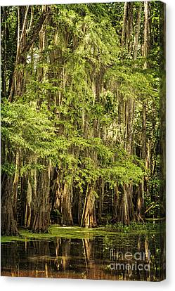 Cypress Reflection On Caddo Lake II Canvas Print