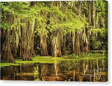 Cypress Reflection On Caddo Lake Canvas Print
