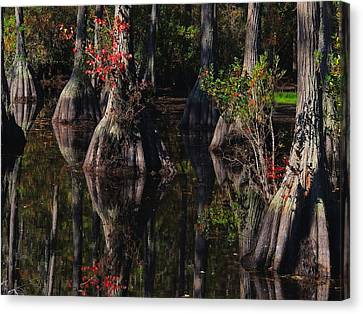 Cypress Reflections Canvas Print by Laura Ragland