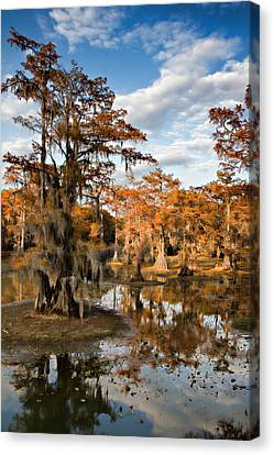 Canvas Print featuring the photograph Cypress Rust by Lana Trussell
