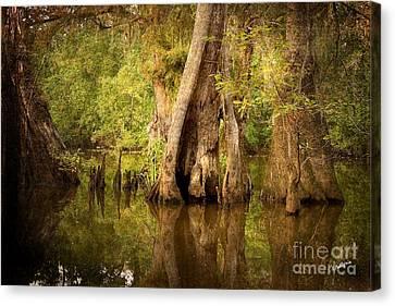 Cypress  Canvas Print by Scott Pellegrin