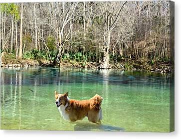 Cypress Spring Pup Canvas Print by Bob Jackson