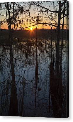 Aquatic Plant Canvas Print - Cypress Swamp At Sunrise by Jim West