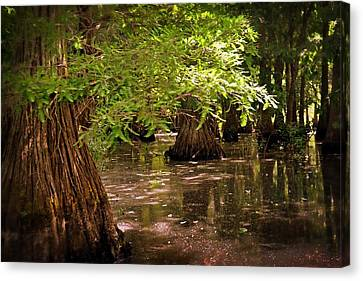 Cypress Swamp Canvas Print by Marty Koch
