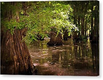 Cypress Swamp Canvas Print by Marty Koch