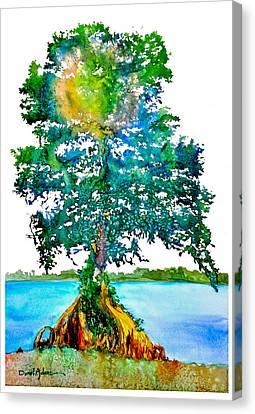 Da107 Cypress Tree Daniel Adams Canvas Print