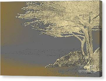 Cypress Tree On Beach Canvas Print by Linda  Parker
