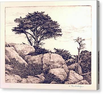 Cypress Tree Canvas Print by Tom Wooldridge