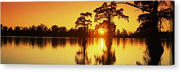 Cypress Trees At Sunset, Horseshoe Lake Canvas Print by Panoramic Images