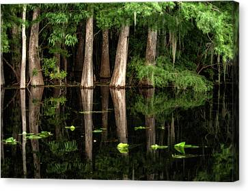 Cypress Trees In Suwanee River Canvas Print by Sheila Haddad