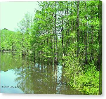 Bright Green Cypress Trees Reflection Canvas Print