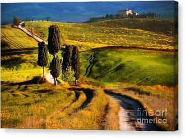 Cypresses Of Toscany Canvas Print by Jaroslaw Blaminsky