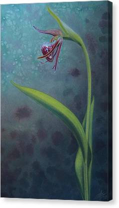 Cypripedium Arietinum Iv Canvas Print