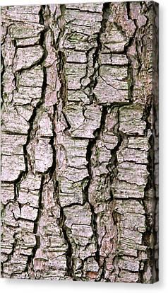 Cyprus Cedar Bark Abstract Canvas Print by Nigel Downer