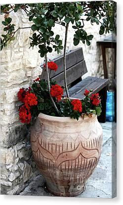 Cyprus Flowers Canvas Print