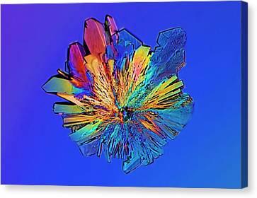 Cysteine Crystal Canvas Print by Antonio Romero
