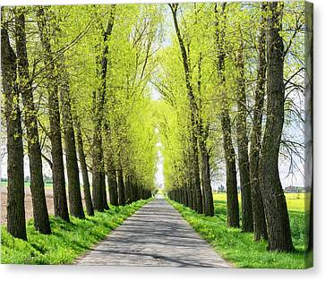 Czech Republic Tree Lined Road Canvas Print
