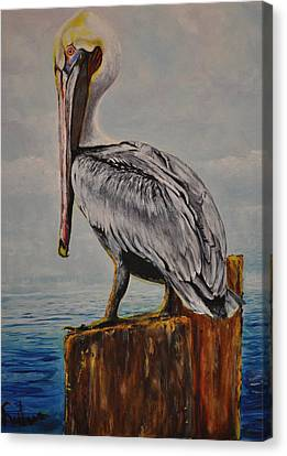 Da Pelican Canvas Print