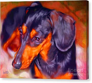 Dachshund Portrait Canvas Print by Iain McDonald