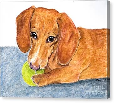 Dachshund With Tennis Ball Canvas Print