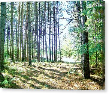 Dad's Woods I Canvas Print by Shirley Moravec