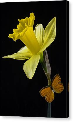 Daffodil And Butterfly Canvas Print