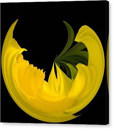 Daffodil Arc Canvas Print by Cyndy Doty