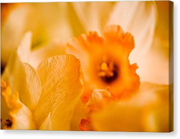 Daffodil Bouquet Canvas Print by John Holloway