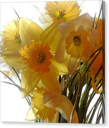 Daffodil Bouquet Canvas Print