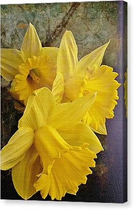 Canvas Print featuring the photograph Daffodil Burst by Diane Alexander