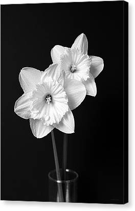 Daffodil Flowers Black And White Canvas Print by Jennie Marie Schell
