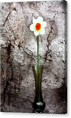 Daffodil Canvas Print by Gray  Artus