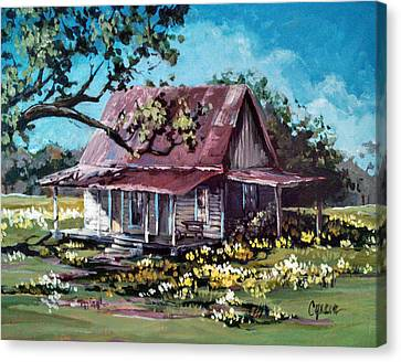 Daffodil Hill Canvas Print by Cynara Shelton