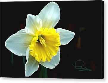 Canvas Print featuring the photograph Daffodil by Ludwig Keck