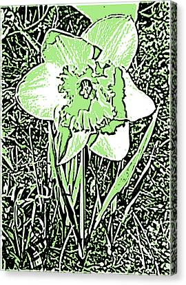 Daffodil Pen And Ink In Green Canvas Print