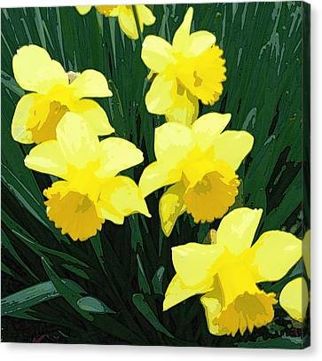 Daffodil Song Canvas Print by Pamela Hyde Wilson