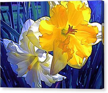 Canvas Print featuring the photograph Daffodils 1 by Pamela Cooper
