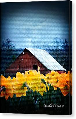 Daffodils And A Red Barn Canvas Print
