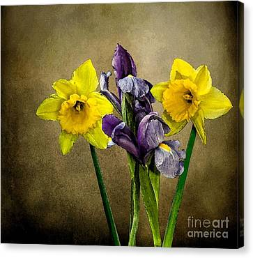 Daffodils And Iris Canvas Print