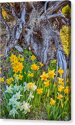 Daffodils And Sculpture Canvas Print by Omaste Witkowski